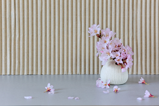 A small vase with sakura flowers.