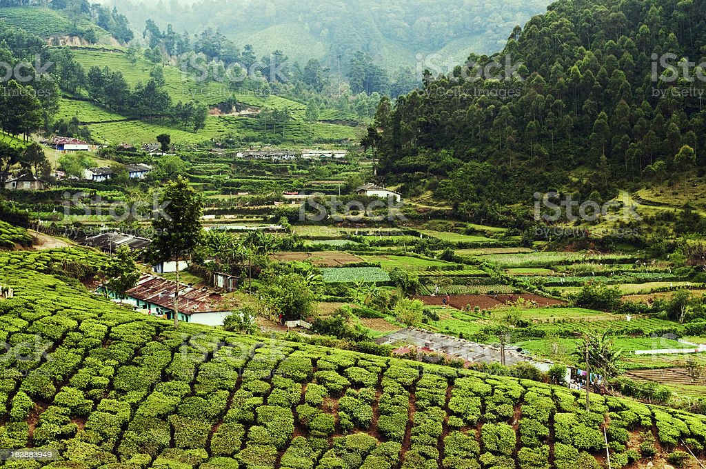 Small village at tea plantations stock photo