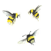 3 small watercolor bees