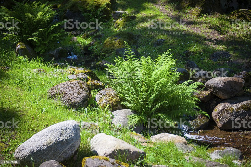 Small waterfall and fern royalty-free stock photo