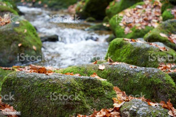 Photo of Small waterfall flows through landscape with lots of stones and autumn leaves. closeup.