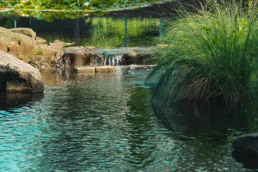 Små Vattenfall I En Bäck Omgiven Av Träd-foton och fler bilder på Berg