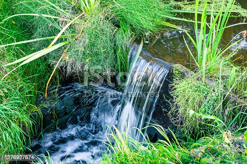Nice view of a small waterfall in a stream surrounded by lush grass in the middle of the forest.
