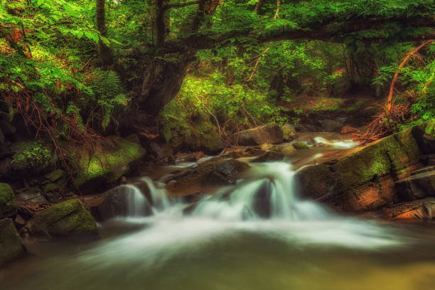 Small waterfall in deep green forest stock photo