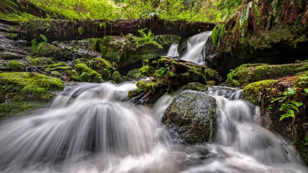 Ein kleiner Wasserfall im Regenwald, Nordkalifornien – Foto