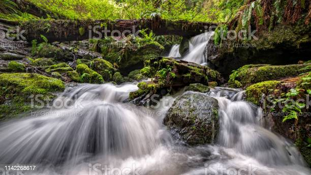 Photo of A Small Waterfall in the Rain Forest, Northern California
