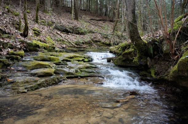 Small waterfall in woods stock photo