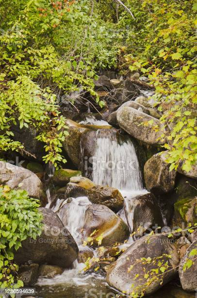Photo of A small waterfall runs over rocks in the forest
