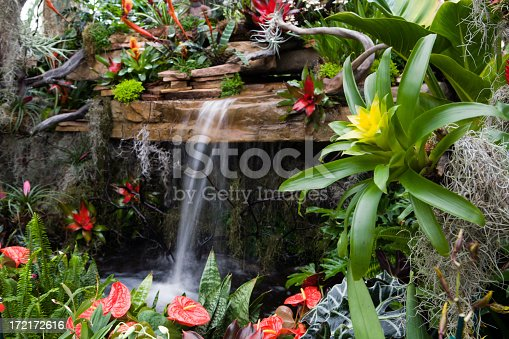 Tropical plants and waterfall.  Great background.