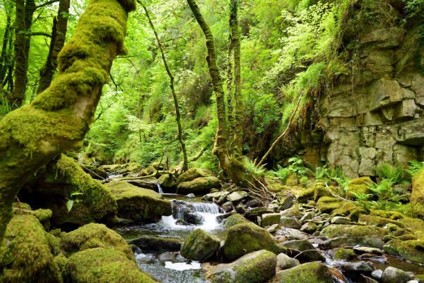Kleine Wasserfälle in der Nähe des Torc Waterfall, einer der beliebtesten Touristenattraktionen Irlands, im Wald des Killarney National Park. – Foto