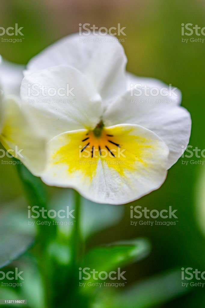 small white and yellow flower stock photo