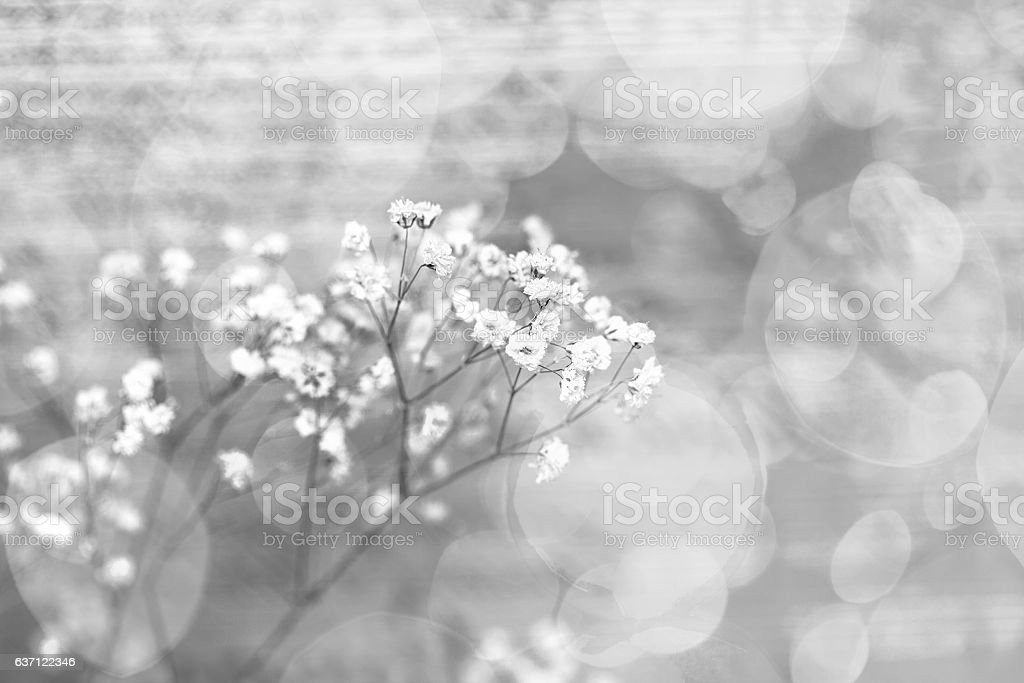 Small white flowers on an abstract background
