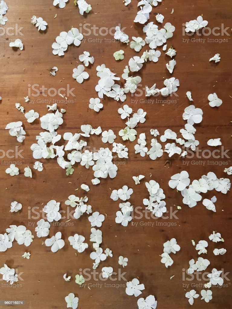 Small White Flowers Scattered On Timber Background Stock Photo