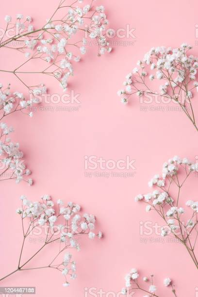 Photo of Small white gypsophila flowers lying in a frame on a pink background with place for text.