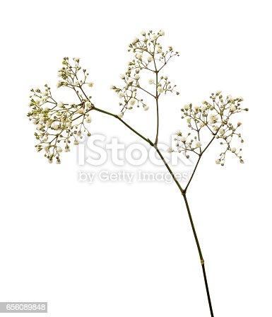 istock Small white gypsophila flowers 656089848
