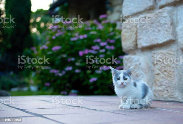 Small white kitty picture id1165710493?b=1&k=6&m=1165710493&s=612x612&h=7kcxxtkzvsbtnugtjot7a2jendiu7fcrkxctdkd75go=