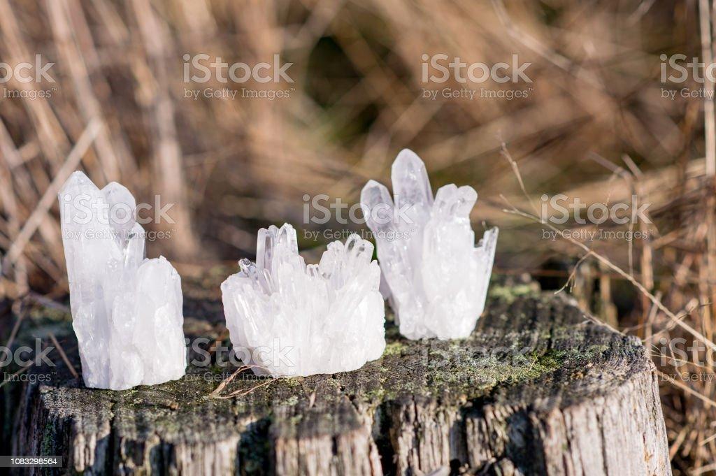 3 kleine weiße Quarz-Kristalle auf einem alten Baum stehend – Foto