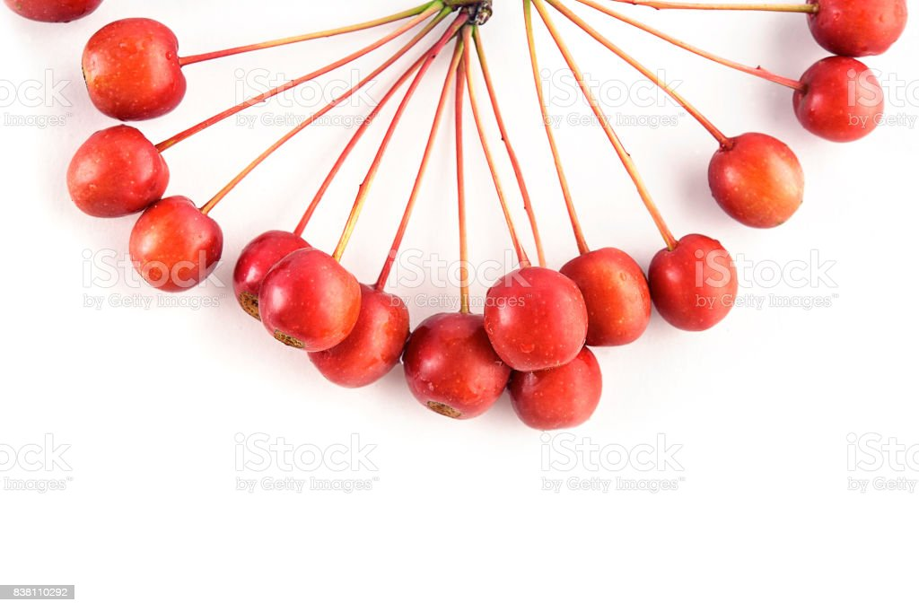 Small wild red crab apples (rennet) isolated on white background stock photo