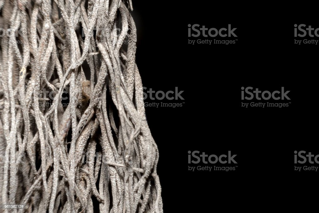 Small wooden roots on a black background. stock photo
