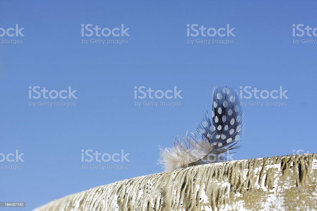 Small Woodpecker Feather on Birdbath royalty-free stock photo