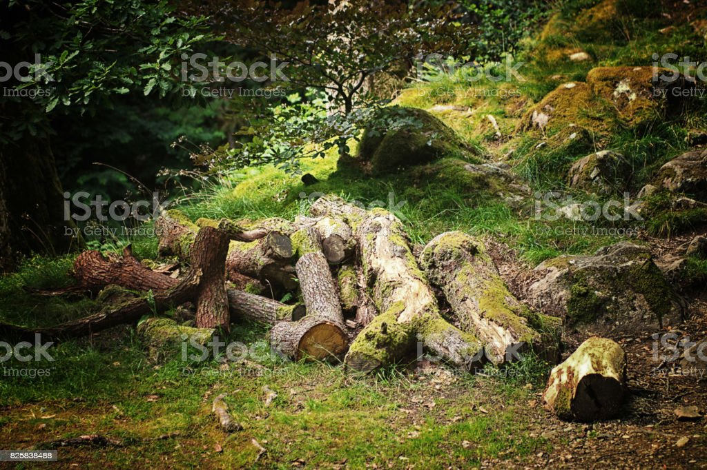 Small woodpile near Ullswater stock photo