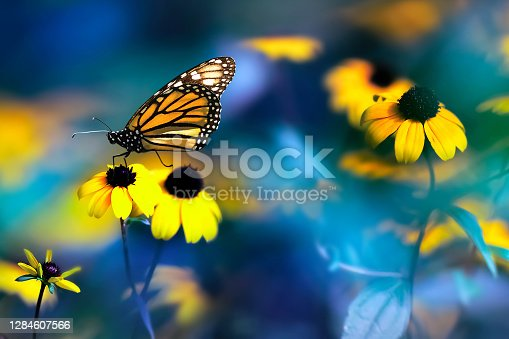 Small yellow bright summer flowers and Nonarch butterfly on a background of blue and green foliage in a fairy garden. Macro artistic image. Banner format.
