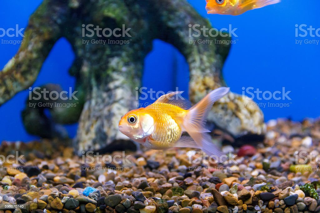 small yellow fish underwater stock photo