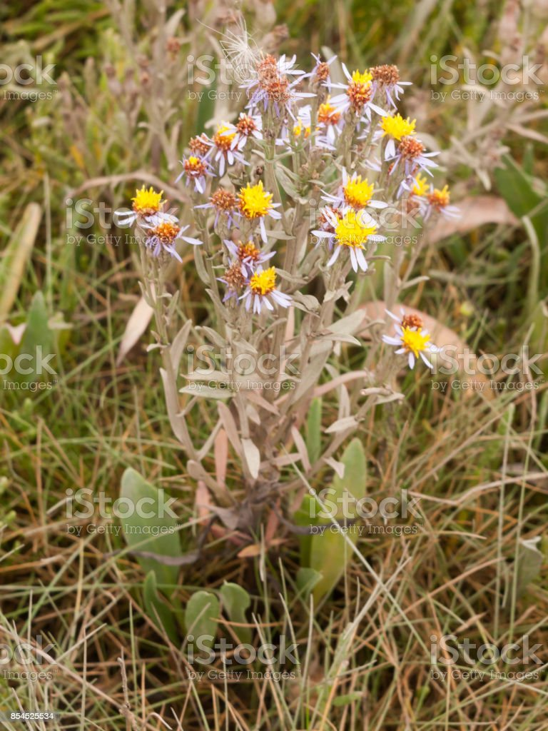 Small Yellow Flower Heads On Brown Dying Plant Pretty Stock Photo Download Image Now Istock