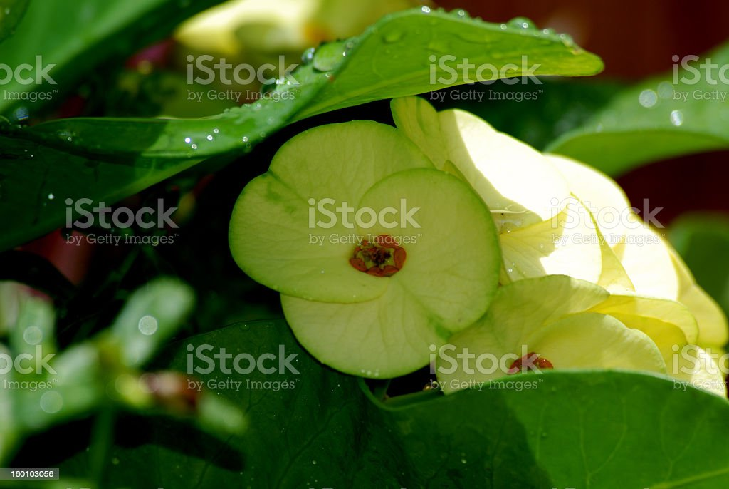 small yellow flower royalty-free stock photo