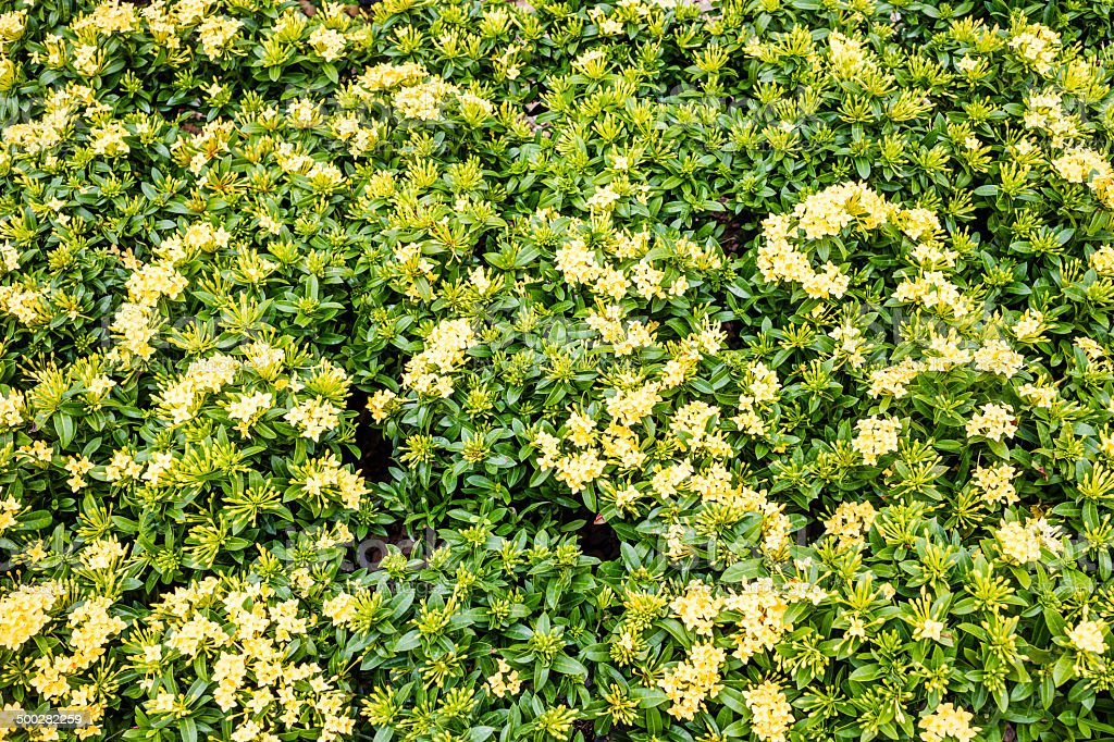 small yellow flowers background royalty-free stock photo