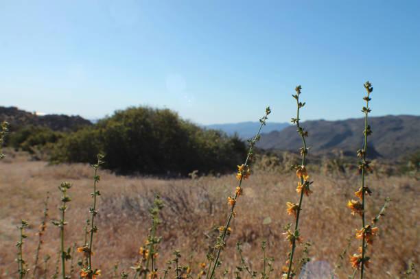 Small Yellow Flowers in the Desert stock photo