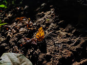 A small yellow leaf fall on the soil macro shot in the daytime when sunlight fall on it.