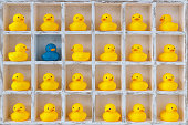 Small yellow rubber ducks in pigeon holes, one blue duck.