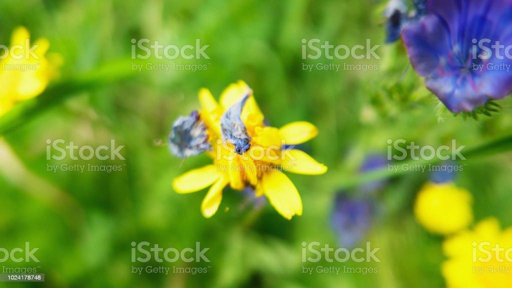 Fotografia De Pequenas Flores Silvestres Amarillas Y Mas Banco De