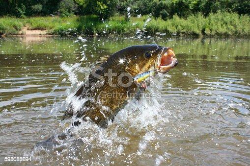 istock Smallmouth Bass 1446 598088694