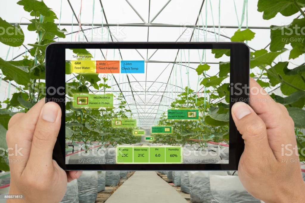 Smart agriculture concept, Agronomist or farmer use Artificial intelligence and augmented reality in farm to help grow systems, saving water ,resources reduce labor time, make high yield and predict stock photo