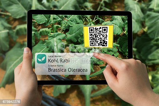 istock Smart agriculture, farm , industry 4.0 , Augmented reality concept. Farmer hand using tablet for scanning kind of plant with QR code application in vegetables farm. 675942276