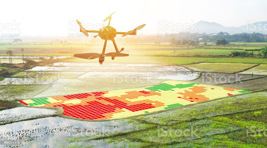 Smart agriculture , farm , precision farming concept. Drone and NIR images application screen used to create field health maps for normalize difference vegetation index in field rice with flare light. stock photo