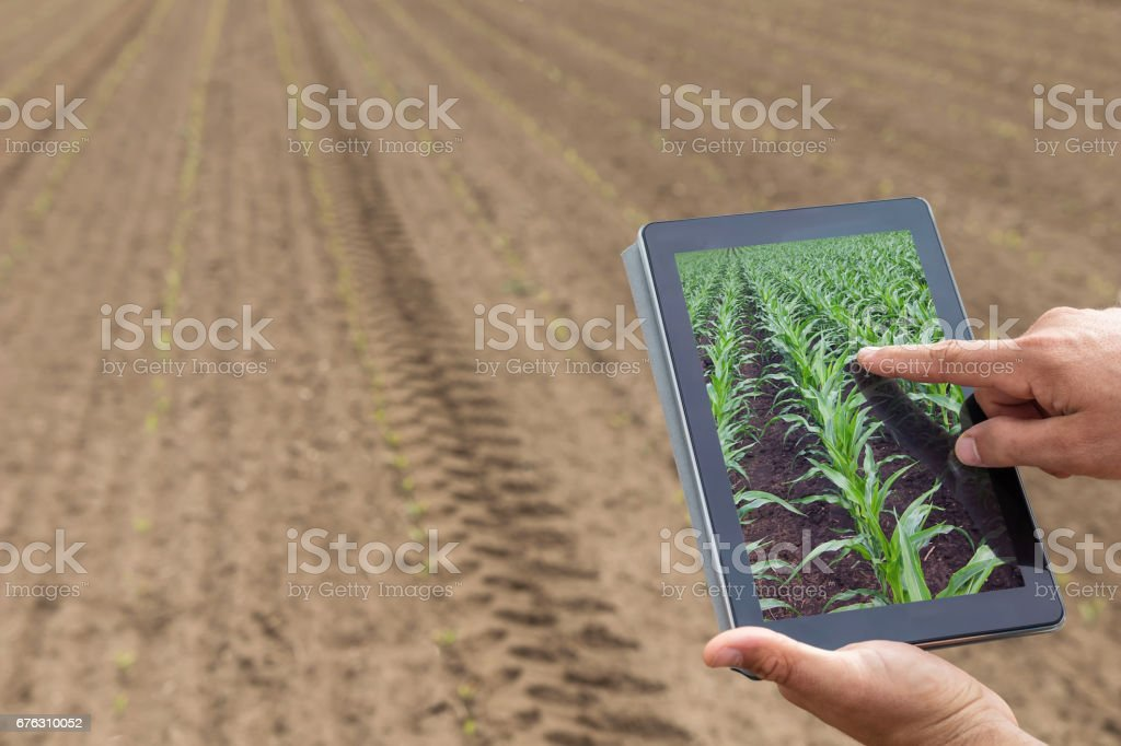 Smart agriculture. Farmer using tablet corn planting. Modern Agriculture concept. - foto de stock