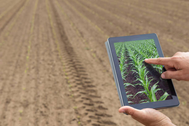 Smart agriculture. Farmer using tablet corn planting. Modern Agriculture concept. stock photo