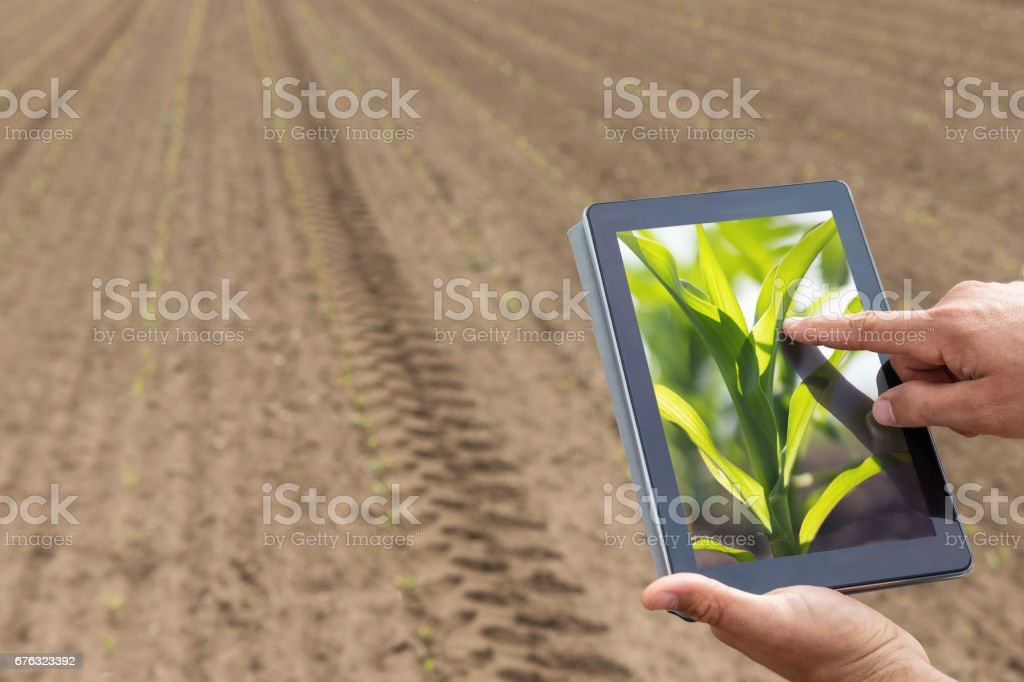 Smart agriculture. Farmer using tablet corn planting. Modern Agriculture concept. - foto de acervo