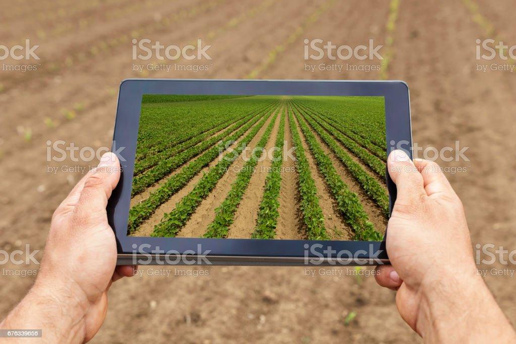 Smart agriculture. Farmer using tablet Soy planting. Modern Agriculture concept. - foto de acervo
