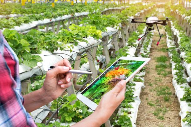 Agricultura inteligente, concepto de la agricultura de precisión. Granjero con drone y NIR imágenes pantalla de aplicación utilizado para comprobar la salud todos los mapas de vegetación de alerta de la enfermedad en la granja de fresa vertical con la luz de la llamarada. - foto de stock