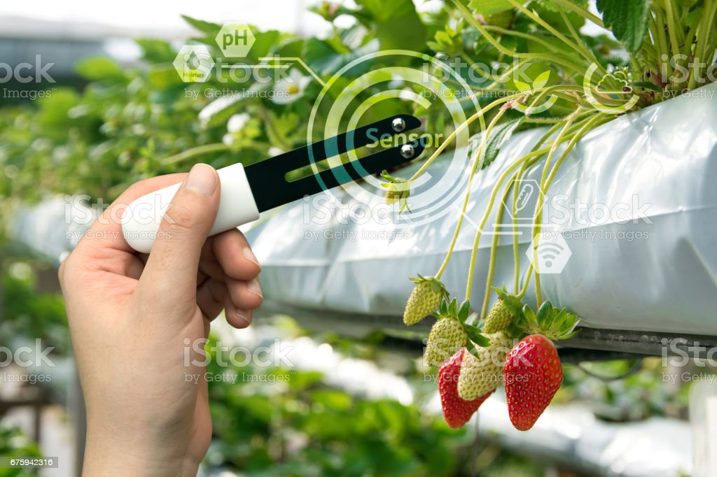 Smart agriculture, sensor concept. Hand holding smart hardware for measure moisture, ph, nitrogen, phosphorus, potassium and sunlight in soil with strawberry farm background and graphic stock photo