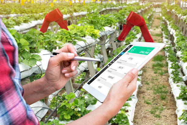 Smart agriculture, vertical farm , sensor technology concept. Farmer hand using tablet for monitoring temperature , humidity , pressure and light of soil in strawberry farm and control ai robot arm. stock photo
