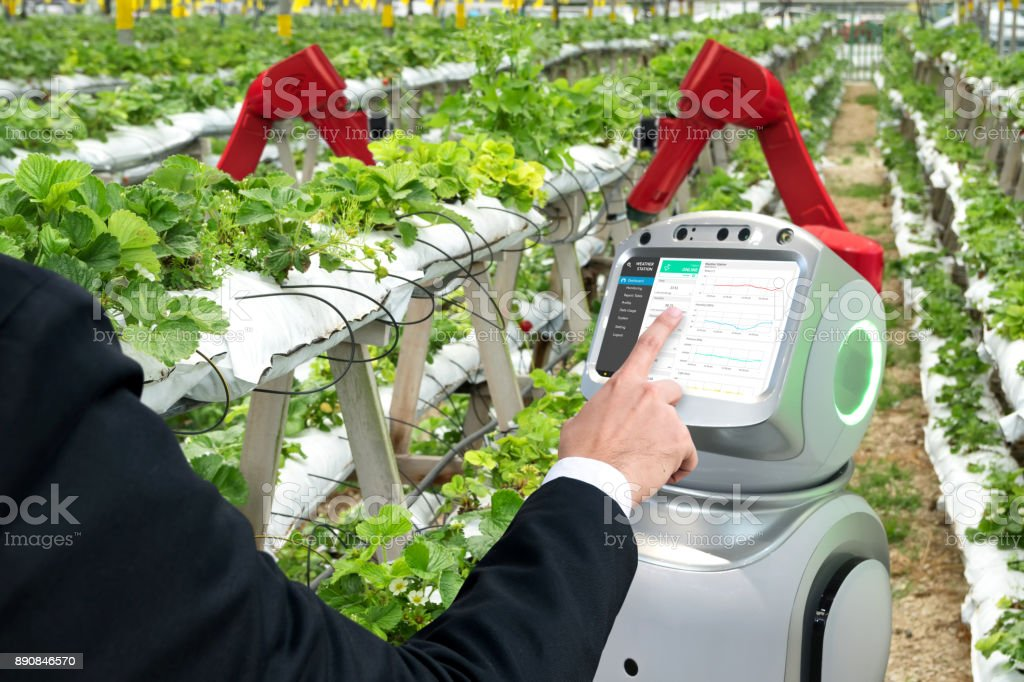 Smart agriculture, vertical farm , sensor technology concept. Farmer hand using autonomous assistant robot arms for monitoring temperature , humidity , pressure and light of soil in strawberry farm. stock photo
