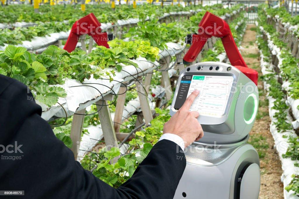 Intelligente Landwirtschaft, vertikale Farm, Sensor-Technologie-Konzept. Landwirt manuell unter Verwendung autonomer Assistent Roboterarmen zur Überwachung von Temperatur, feuchte, Druck und Licht des Bodens in Erdbeerfarm. – Foto