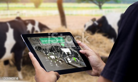 Hands using digital tablet with blurred cow as background