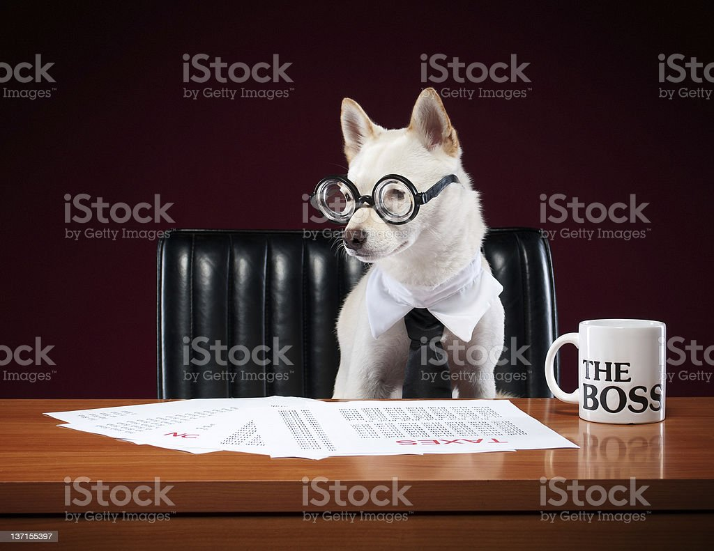 A small white Shiba Inu dog wearing a black tie and thick glasses...