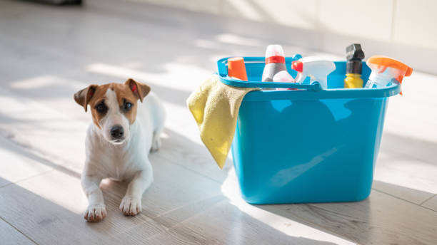 Jack Russell Terrier laying next to a bucket full of chemicals. Dog proofing your house is the best way to keep your pup safe.